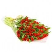 40 szál piros tulipán