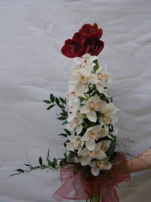 Amarilis orchideával